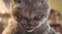 Angry_cat_1